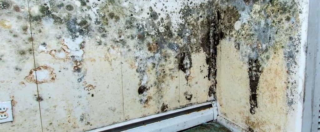 mold moisture