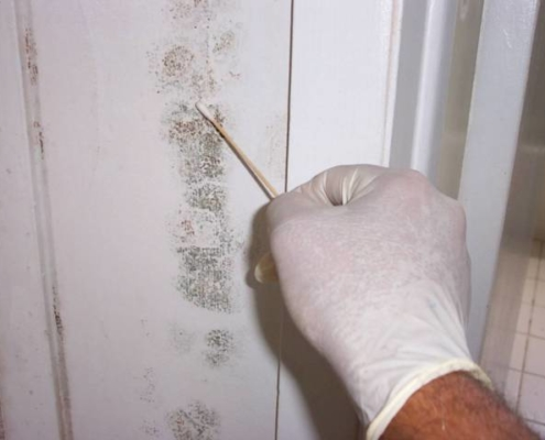 On the Level Southeastern Michigan Home Inspections Mold Testing